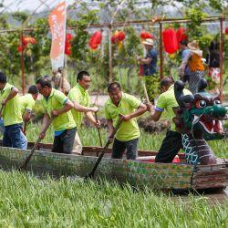 Esta foto muestra a la gente remando un barco dragón en un arrozal durante las celebraciones del Festival del Barco Dragón en Shenyang, en la provincia nororiental china de Liaoning. | Foto:STR / AFP