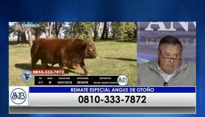 Remate Angus de Otoño