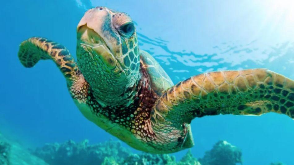 0616_tortuga marina