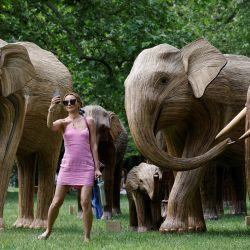 natural de una manada de elefantes asiáticos instaladas por la Elephant Family y The Real Elephant Collective para ayudar a educar al público sobre los elefantes y las formas en que los seres humanos pueden proteger mejor la biodiversidad del planeta, en Green Park, en el centro de Londres. | Foto:Tolga Akmen / AFP