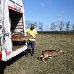 Los ciervos eran cuidados como mascotas.