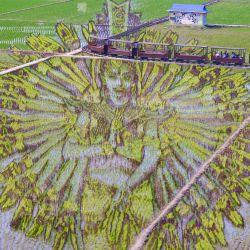 Esta foto aérea muestra una imagen de una deidad, creada por el cultivo de diferentes variedades de arroz, en un arrozal en Shenyang, provincia nororiental china de Liaoning.   Foto:STR / AFP