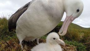 ¿Por qué se conmemora hoy el Día Mundial de los Albatros?
