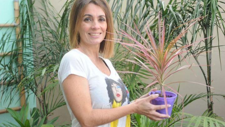 Las mejores plantas para tener en casa según la nasa