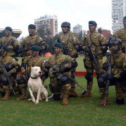 Pueden ser entrenados fácilmente para que se conviertan en excelentes perros lazarillos, perros policía o como animales de rescate en distintas situaciones.