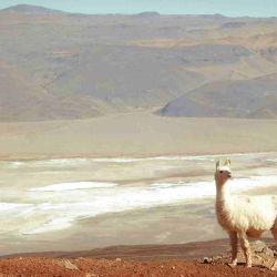 Turismo: Antofagasta de la Sierra, un paraíso en Catamarca.