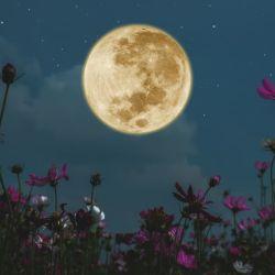 Es la primera Luna Llena de la temporada de invierno y la última Superluna del año.