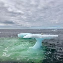 El zorro ártico se encontraba perdido arriba de un iceberg a la deriva.o e e