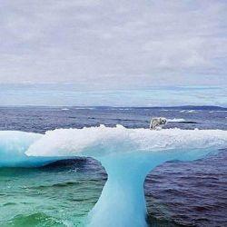 Los pescadores creyeron que se trataba de un bebé de foca que se había perdido de su mamá.id