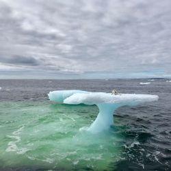 El zorro ártico se encontraba perdido arriba de un iceberg a la deriva.