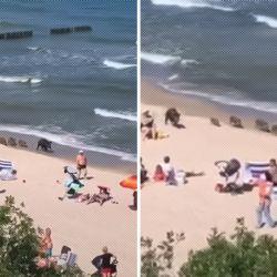 Los jabalíes recorrieron las playas ante la mirada atónita de los bañistas.