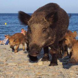 es la primera vez que invaden las playas de la zona y atacan a los desprevenidos turistas.
