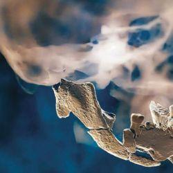 Los restos del cráneo de color pardo fueron encontrados en el el interior del yacimiento Nesher Ramla, en Israel.