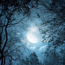 La noche es el momento en el que los árboles pegan el estirón.