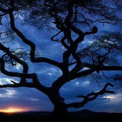 La fotosíntesis tiene lugar a medida que empieza a oscurecer y, sobre todo, durante la noche.