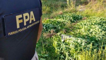 PROCEDIMIENTOS. La Fuerza Policial Antinarcotráfico realiza operativos mientras los fiscales de narcomenudeo definen los criterios para excluir de la persecución penal a las actividades recientemente legalizadas.