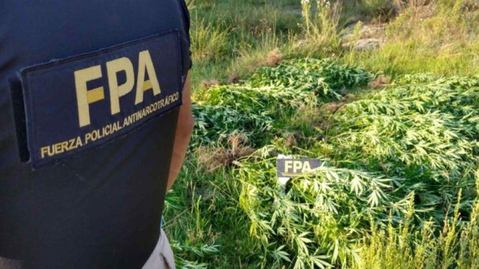 FPA cannabis