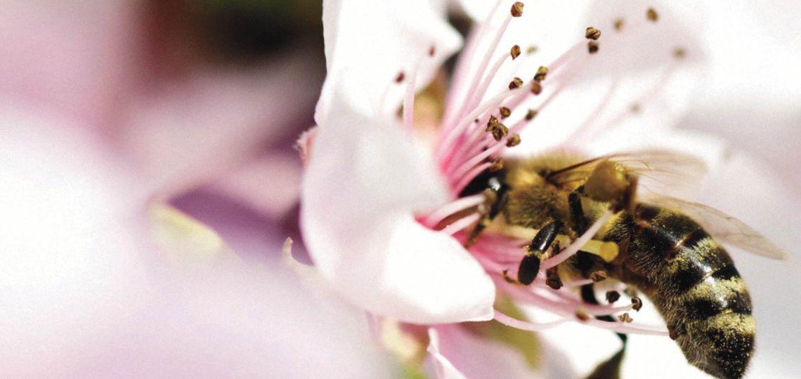 Belleza natural: descubrí el poder de las abejas y su contribución al medio ambiente