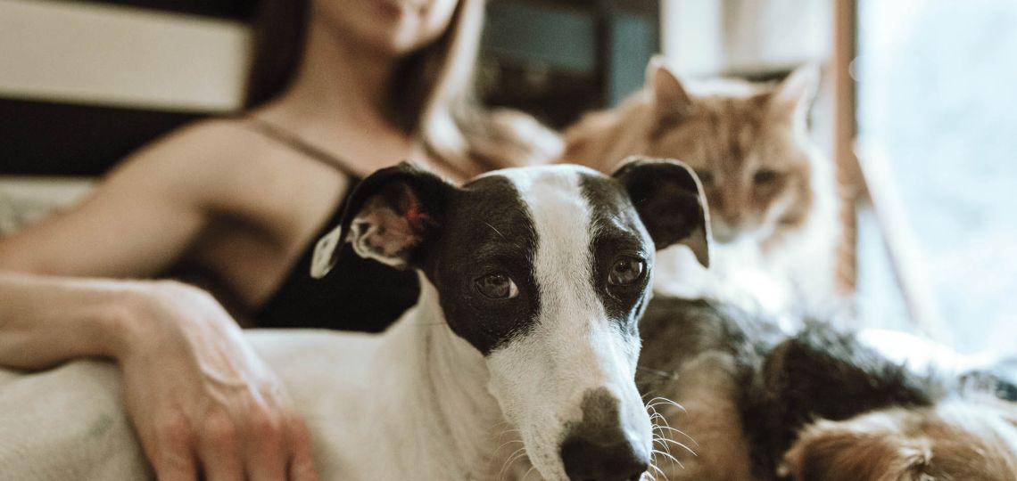 Mascotas: la mejor y más fiel compañía