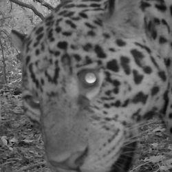 """Los mamíferos avistados se encontraban en la zona categorizada como """"corredores biológicos""""."""