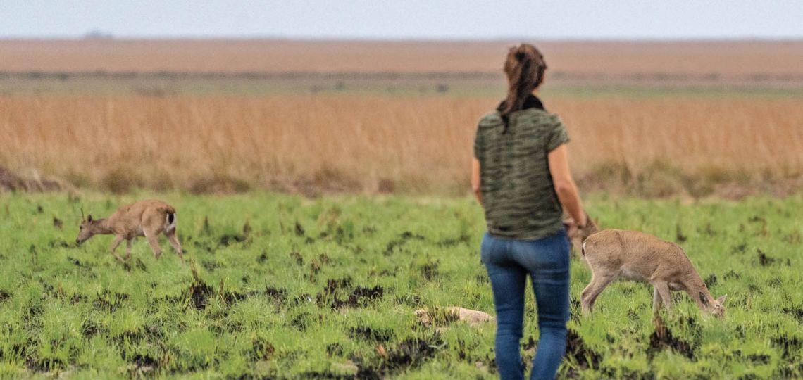 Rewilding Argentina: conocé por dentro la fundación que lucha contra la extinción de especies