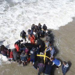 La red permitirá articular las tareas de asistencia y rescate de la fauna marina.