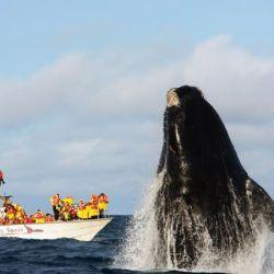 Contribuirá a las acciones de traslado y disposición temporal que requieren con urgencia los rescates de la fauna marina