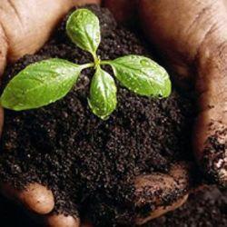 El suelo es el soporte de diferentes formas de vida.