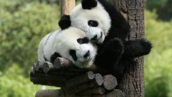 0708_oso panda