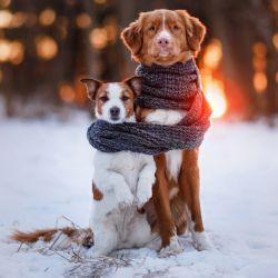 No todas las razas de perros soportan por igual las bajas temperaturas.