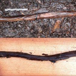 El bastón fue tallado en una sola pieza de madera y medía 21 pulgadas.