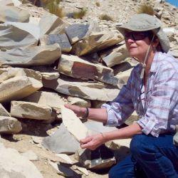 Fue hallado en la Formación Vaca Muerta, en la provincia de Neuquén.