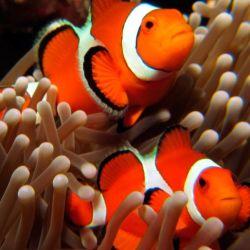 Su velocidad para nadar puede estar relacionada con una adaptación evolutiva.