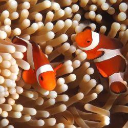 La degradación del hábitat natural de estas especies puede afectar seriamente su desarrollo.