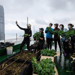 Los agricultores urbanos de Rooftop Republic posan con las verduras cosechadas en una granja en la azotea de la torre del Bank of America, de 150 metros de altura, en Hong Kong. | Foto:Anthony Wallace / AFP