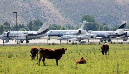 Vacas y jets privados en el aeropuerto de Sun Valley (Idaho).