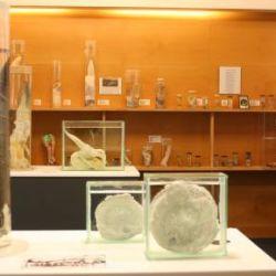 El particular museo cuenta con más de 300 ejemplares de todo tipo, forma y tamaño del miembro viril.