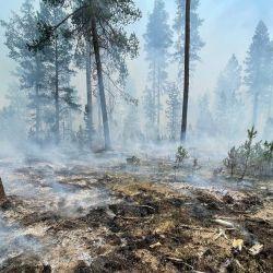 Esta foto muestra una imagen de la línea de fuego del incendio Bootleg cerca de Klamath Falls, Oregón.   Foto:Handout / US Forest Service / AFP