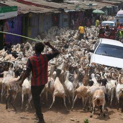 Un pastor aleja un rebaño de ovejas y cabras, que serán vendidas para la festividad musulmana de Eid al-Adha, mientras cruzan una carretera en Kiamako, Nairobi.   Foto:Simon Maina / AFP