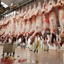 Unos carniceros preparan ovejas sacrificadas en un matadero de la ciudad de Kuwait durante el primer día de la fiesta de al-Adha, celebrada por los musulmanes de todo el mundo. | Foto:Asser Al-Zayyat / AFP