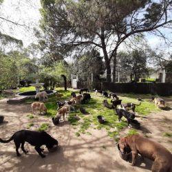 En APRANI conviven 120 animales, entre perros y gatos, rescatados de la calle.