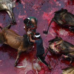 Los devotos musulmanes sacrifican animales durante el Eid al-Adha o el 'Festival del Sacrificio, en Lahore.   Foto:Arif Ali / AFP