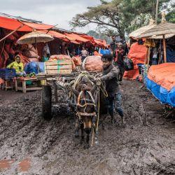 Un hombre empuja su burro y su carro a lo largo de un camino cubierto de barro en un mercado en Hawassa, Etiopía.   Foto:Amanuel Sileshi / AFP