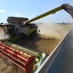 Un agricultor francés y contratistas agrícolas cosechan cebada, con una cosechadora de orugas de 13,80 metros de ancho, en los campos montañosos de    Foto:Jean-Francois Monier / AFP