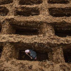 Un trabajador de un cementerio cava los agujeros de las tumbas de las víctimas del coronavirus Covid-19 en el cementerio de Setu Gede en Bogor, Java Occidental.   Foto:Aditya Aji / AFP