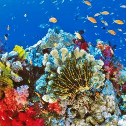 La Gran Barrera se ha deteriorado en gran parte por los episodios de blanqueamiento de los corales, consecuencia de los trastornos climáticos.