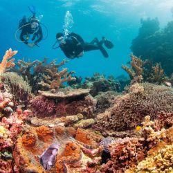 La Barrera de Coral es el mayor arrecife del planeta.