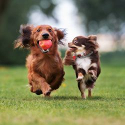 Las mascotas necesitan de controles dermatológicos, ya que pueden ser alérgicos o tener alguna enfermedad que puede ser totalmente prevenible si es detectada a tiempo.