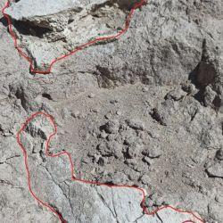 Los restos fósiles fueron hallados por el pastor jujeño Franco Cuevas.