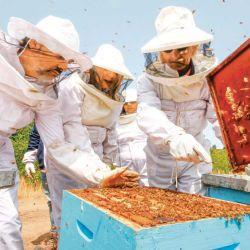 Visita guiada a los colmenares en la ruta bonaerense de la miel.